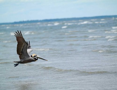 Prepare for the Fall Bird Migration from your St Pete Beach Hotels